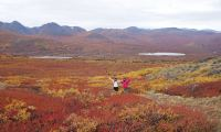 Arctic Day: Hiking Tour | half or full day, Day Tour, Adventure, Summer/Fall, Hiking