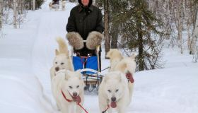 "3rd Prize ""Dog Sledding at the Arctic Circle"" (Ulrike Hans)"