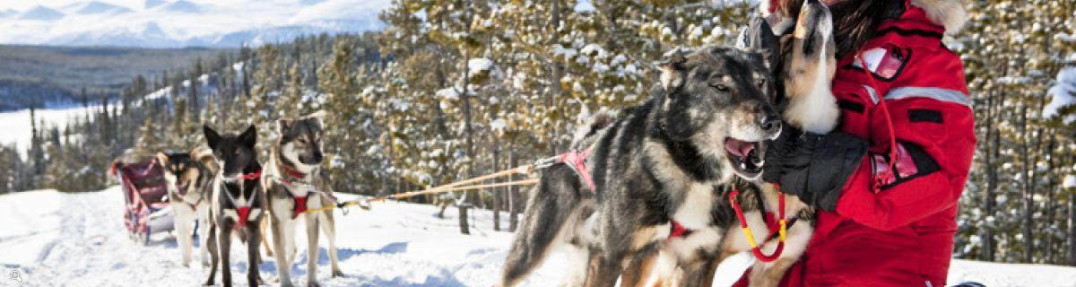 極北の一日:犬ぞり|半日 又は 全日