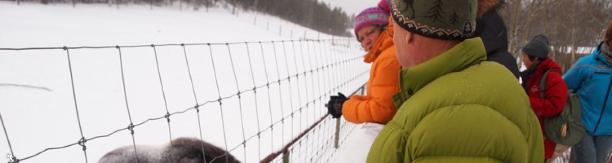 Arctic Day: Taste the snow | Multi-activity tour