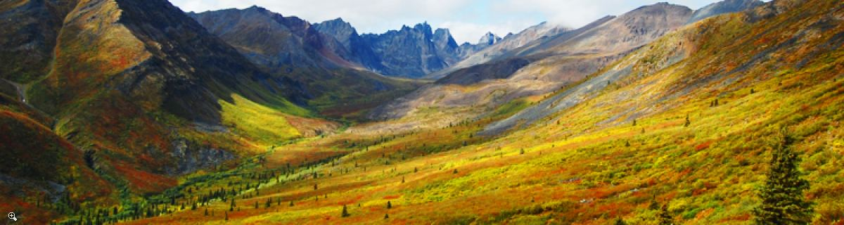 Arctic Tundra & Dawson City | Fall colors at their best