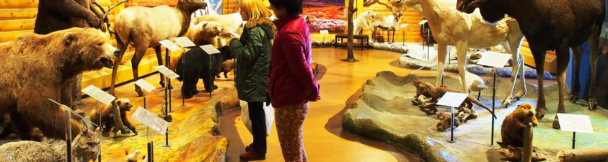 Arctic Day: Wilderness City & Museum Tour | half day