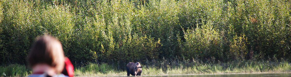 ユーコン川での3日 | カーマックスからミント