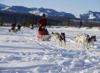 Group dog sledding on trail