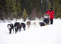 Mushing away