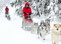 Dog Sledding on the forest trail