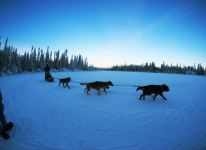 Mushing in the Yukon