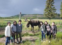 Group with a moose