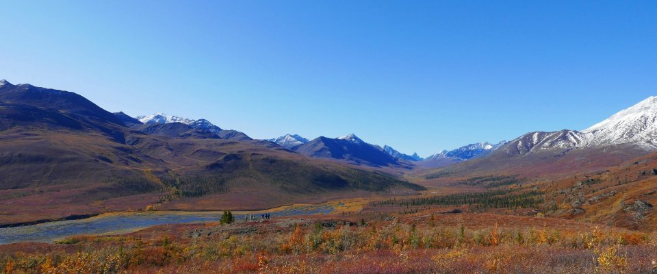 Arctic Tundra & Dawson City | naturally wild