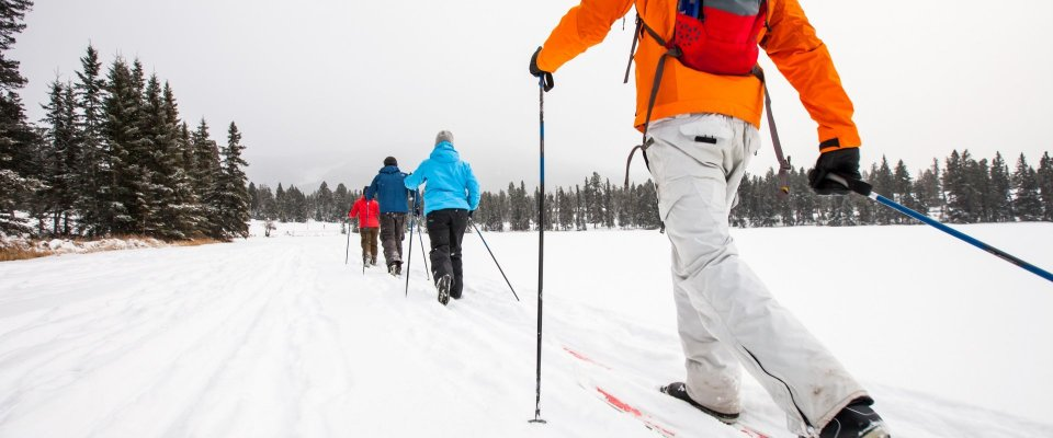 Arctic Day: Cross Country Ski Tour | half day