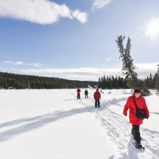 Arctic Day: Snowshoeing | half day (Mar 9 , 2019)