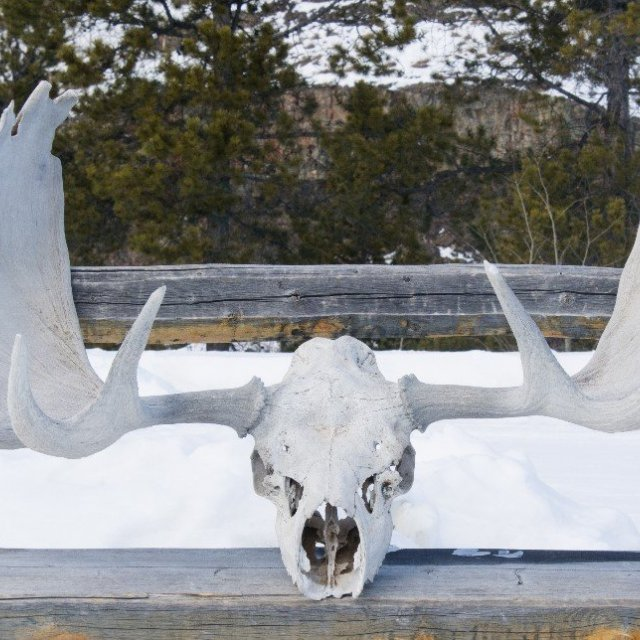 Arctic Day: Wildlife & Hot Springs | half day (Mar 9, 2019)