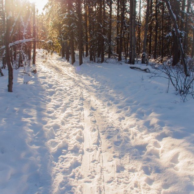 Arctic Day: Snowshoeing Tour | half day (Feb 3, 2019)