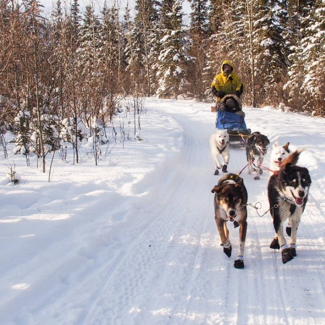 Arctic Day: Dog Sledding Tour | half day (Feb 17, 2019)