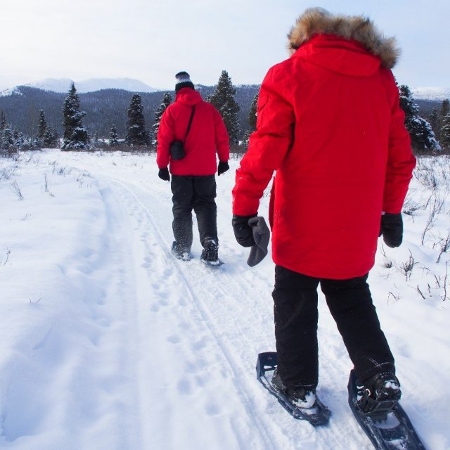 Arctic Day: Snowshoeing Tour | half day (Feb 14 2019)