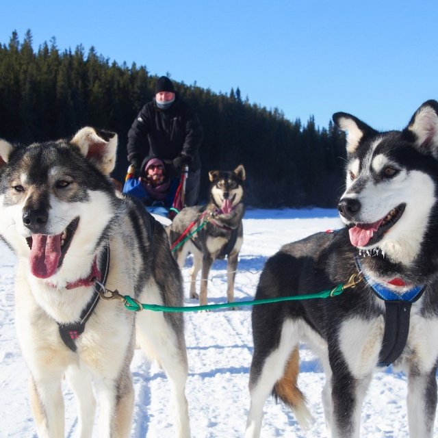 Arctic Day: Dog Sledding Tour | half day (Mar 3, 2019)