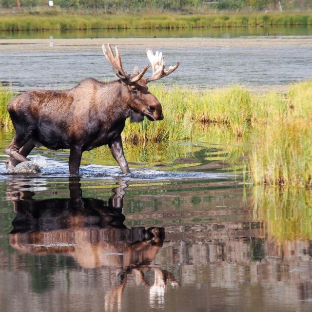 Arctic Day: Wildlife & Hot Springs | half day (Aug 24, 2019)