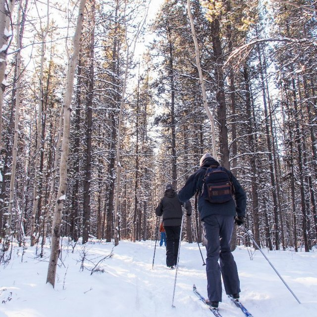 Arctic Day: Cross Country Ski Tour | half day (Feb 23, 2019)