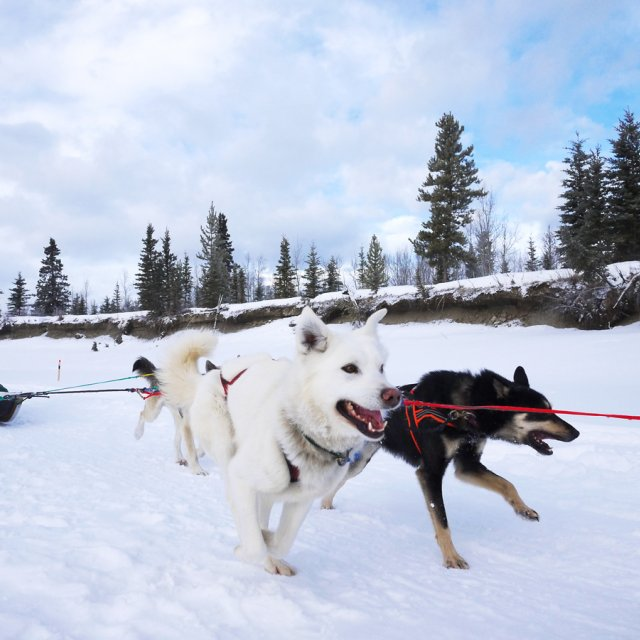 Arctic Day: Dog Sledding | half day (Feb 23, 2013)