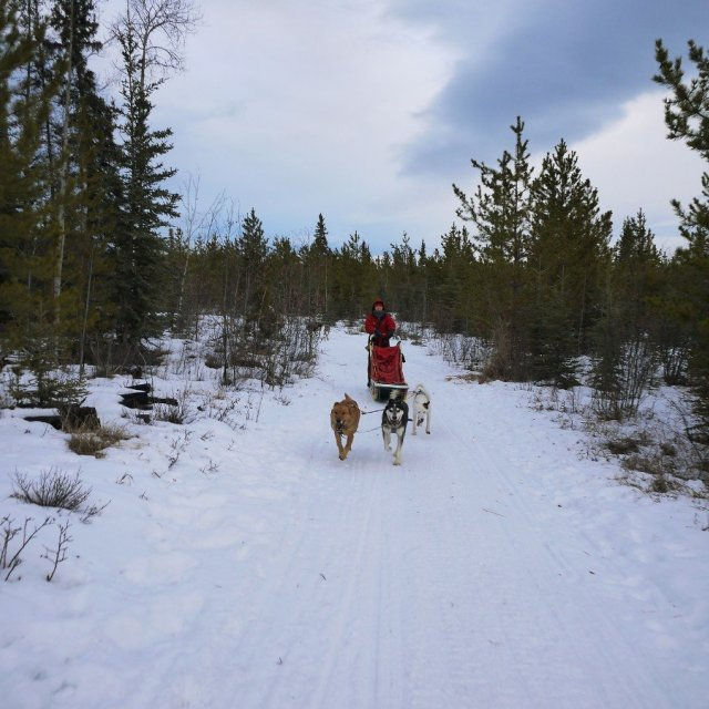 Arctic Day: Dog Sledding Tour | half day (Nov 26, 2018)