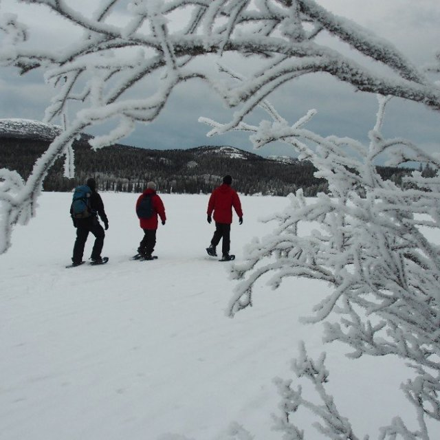 Arctic Day: Snowshoeing Tour | half day (Dec 6, 2018)