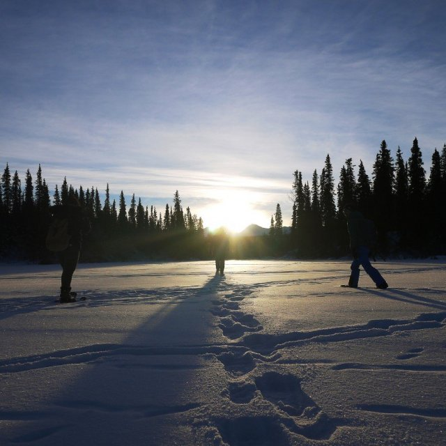Arctic Day: Snowshoeing Tour | half day (Dec 12, 2018)